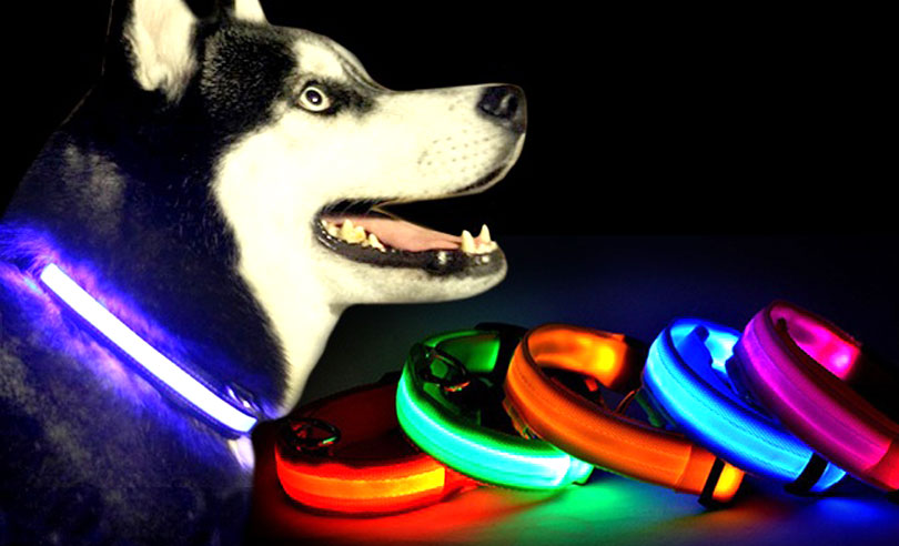 4-light-up-dog-collar